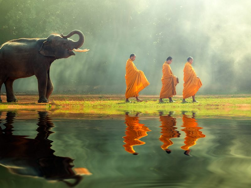 Young,Elephant,With,Monk,Alms,Round